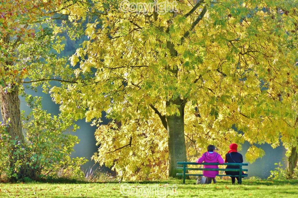 Peter Soult: Autumn leaves Equipment: Nikon D50 & 18-55mm Lens