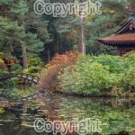 Mark Payne: Autumn at the Japanese garden at Tatton park.  Equipment: Nikon D800 & 50mm f1.4D