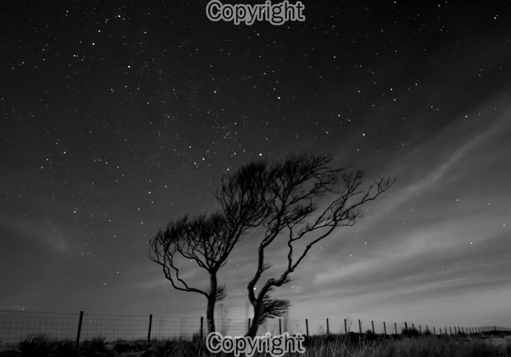John O'Neill: Tree by Moonlight Equipment: X-Pro1 with 18mm f2 Lens
